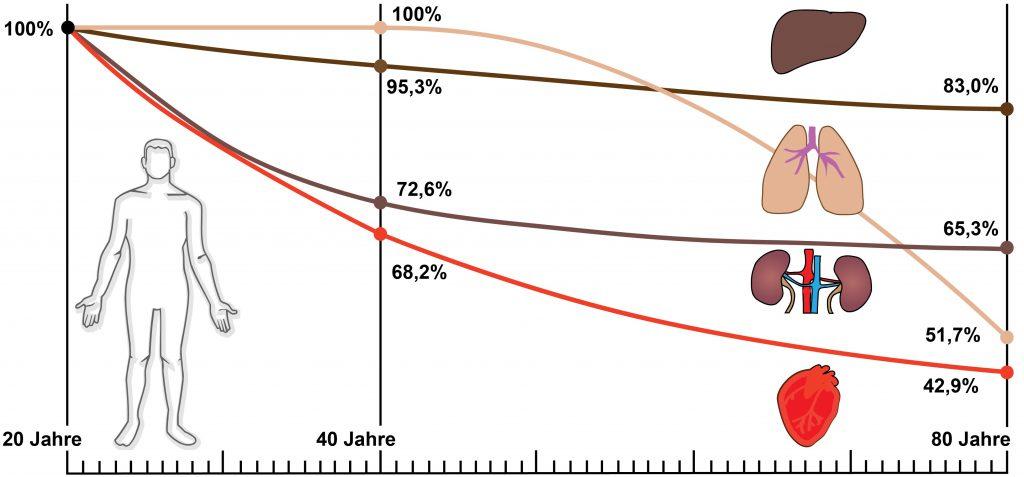 Mit zunehmendem Lebensalter kommt es zu einer Abnahme des körpereigenen Coenzym Q10. Die Abbildung zeigt die Konzentrationen im Leber-, Lungen-, Nieren- und Herzgewebe.